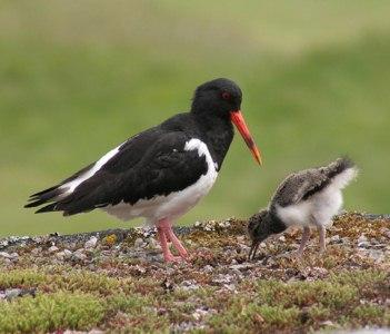 mamma uccello con pulcino